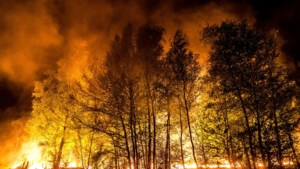 Brandweer extra alert vanwege kans op natuurbranden
