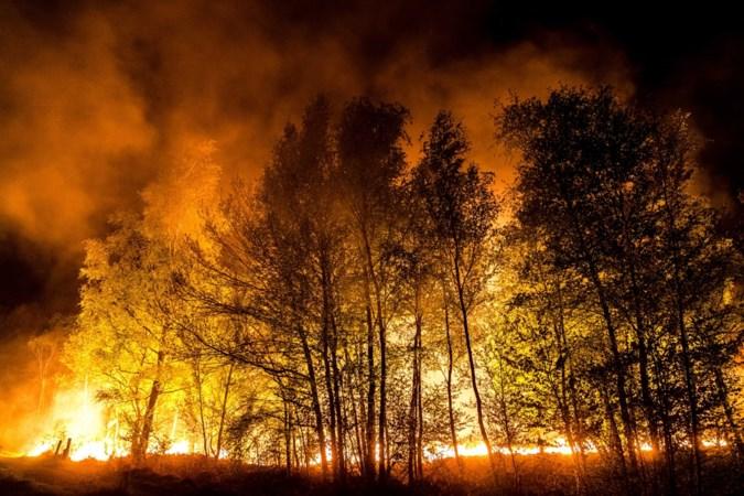 Brandweer vanaf woensdag extra alert vanwege kans op natuurbranden in Limburg