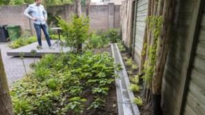 Gemeente vergoedt planten die stenen vervangen