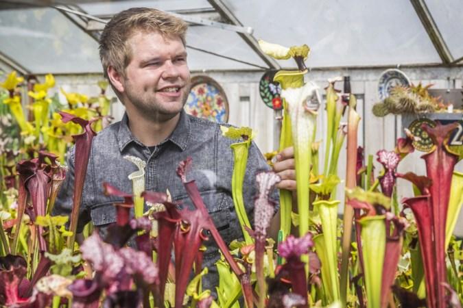 Laurens Eggen (27) uit Blerick is gefascineerd door vleesetende planten: 'De trompetbekerplant is mijn favoriet'