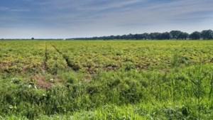 Hyperambitieus plan voor vijf a zes nieuwe dorpen in de Peel: 'Een droom moet je een keer beginnen'