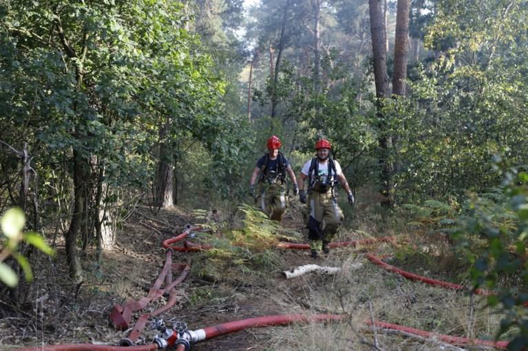 Video: Brandweer worstelt met grote bodembrand in bos bij Venray