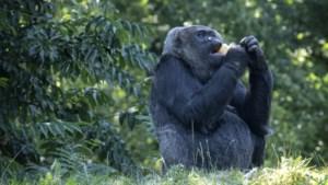 Limburgse dierentuinen krabbelen weer op