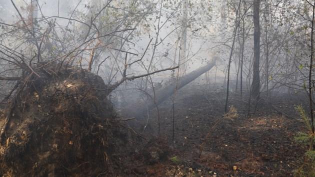 Natuurbrand buitengebied Venray legt 3 hectare bos in as
