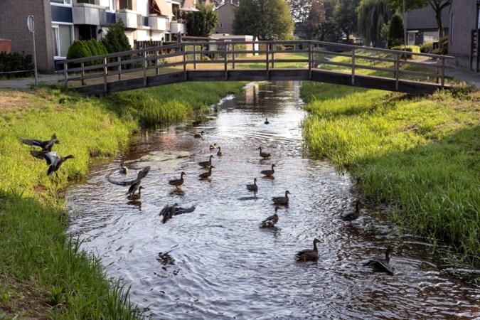 Het watermysterie van de Baarlose Kwistbeek, eerst droog dan weer water