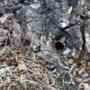 Gemeente Leudal plant nieuwe boom op plek vernielde, monumentale eik