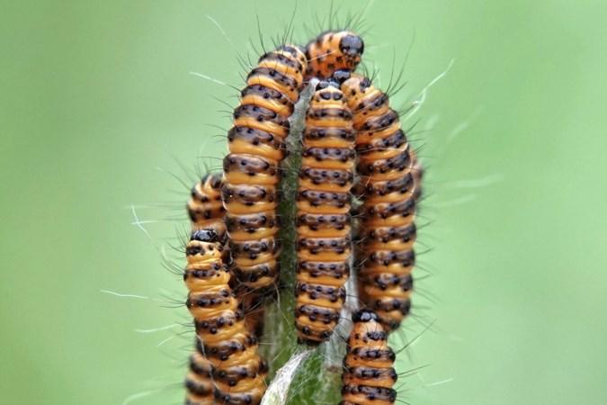 Mens en Natuur: geschapen voor één doel in het leven: vreten, vreten, vreten...