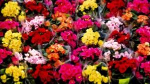 Hart voor Bloemen BV in Venlo failliet op eigen verzoek