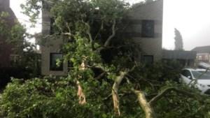 Grote tak waait tegen huis Baarlo: 'We hadden net het dak gerenoveerd'