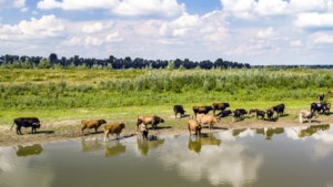 Verkoop natuurvlees ook in Limburg stopgezet na vondst dioxine in vlees van runderen