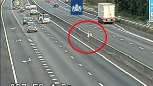 Bizar gedrag op Limburgse snelwegen: van rennen in onderbroek over A73 tot bidden op de vluchtstrook