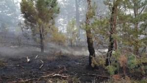 Brandweer rukt uit voor heidebrand op Brunssummerheide