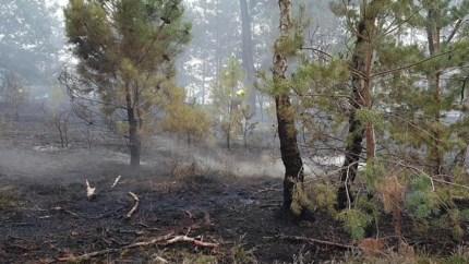 Video: Veel hulpdiensten op de been voor heidebrand op Brunssummerheide
