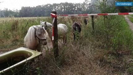 Afval gedumpt in buitengebied: lekkende vloeistof stroomt paardenweide in