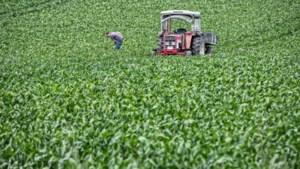 Foto van de week: Speurtocht naar de man met de rode tractor