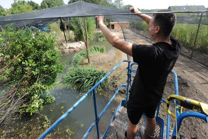 Naar Zuid-Amerika in ZooParc Overloon