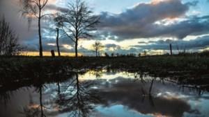 Felle kritiek op Weerter plan voor twintig hectare bos