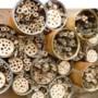Raadsfracties Valkenburg krijgen eigen bijenhotels van gemeente