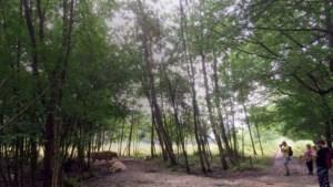 Vertrouwde paaltjesroutes maken plaats voor wandelknooppunten in Zuid-Limburg