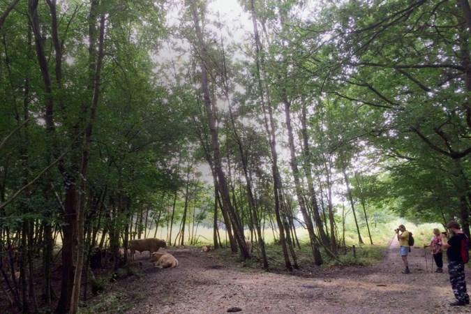 Vertrouwde paaltjesroutes maken plaats voor wandelknooppunten in Zuid-Limburg: 1500 kilometer wandelroutes vernieuwd