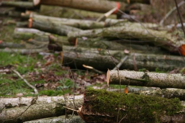 Hout hakken voor de gladde slang in bos America