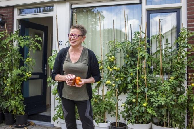 De tomaten van Corry uit Swartbroek zijn een bezienswaardigheid