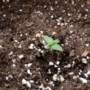 Rechter: sluiting growshop Kelpen-Oler in 2018 na vondst hennep niet voldoende onderbouwd
