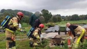 Brandweer redt in put gevallen kalf Mechelen