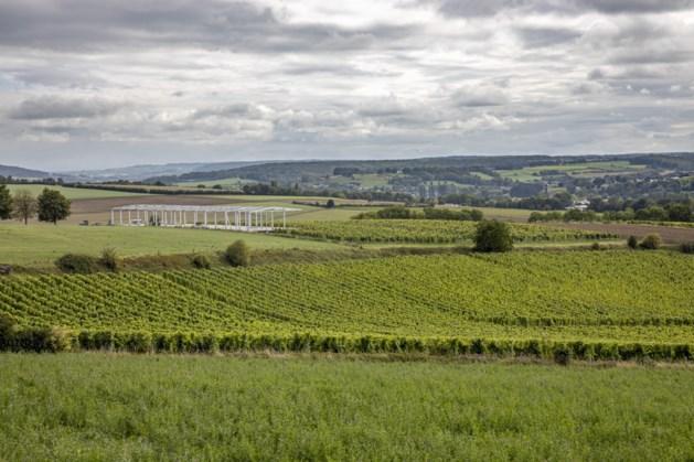 Limburg produceert circa een derde van Nederlandse wijnen: 'de kwaliteit wordt steeds beter'