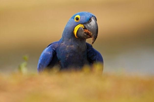 Ballonvaarder moet verzamelaar 65.000 euro betalen voor omgekomen papegaaien