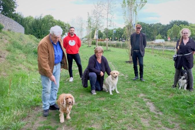 Honden kunnen hun energie kwijt op ravotterrein Boshoven