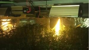 Politie rolt wietplantage met 758 planten op