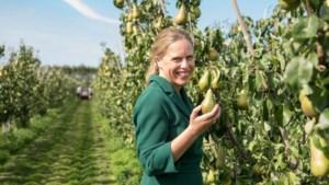 Zo wil minister Schouten de veehouderij toekomstbestendig maken