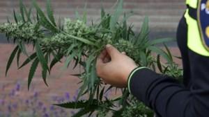 Weer drugspand gesloten in Maasgouw