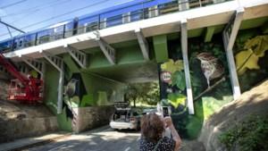 Kleurrijk tafereel van graffiti aan Voerendaalse Hoolstraat
