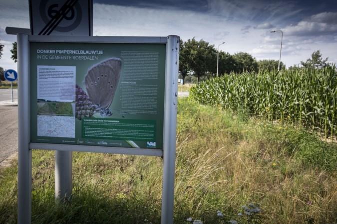 Waterschap Limburg hangt dwangsom van honderdduizend euro boven het hoofd na nog een keer illegaal maaien