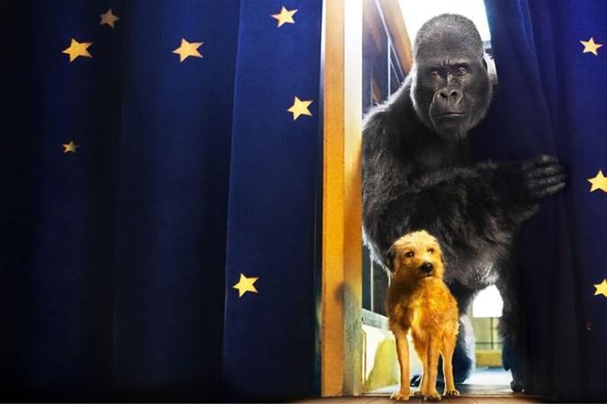 Filmrecensie 'De Enige Echte Ivan': Ivan is een wel erg brave zilverrug