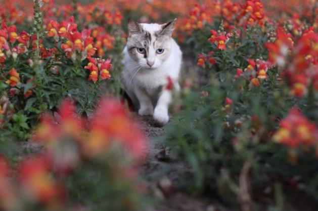 Dierenbescherming: door katten binnen te houden los je het milieuprobleem niet op