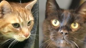 Dier van de week: Fudge en Oscar