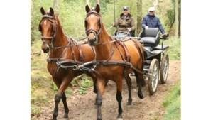 Ruitersportvereniging Haelen houdt rit door Leudal