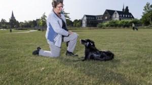 Gemeente reageert positief op actie voor aanleg van omheinde hondenspeelweide in binnenstad van Sittard