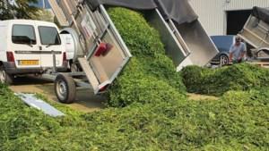 Eindspurt helpt Taxus Taxi toch nog voorbij vierhonderd ton snoeisel