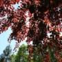 Gemeente plant 'forse boom' bij heropening vernieuwde Valkenburgstraat in Berg
