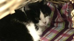 Dier van de week: kattensenioren zoeken baas