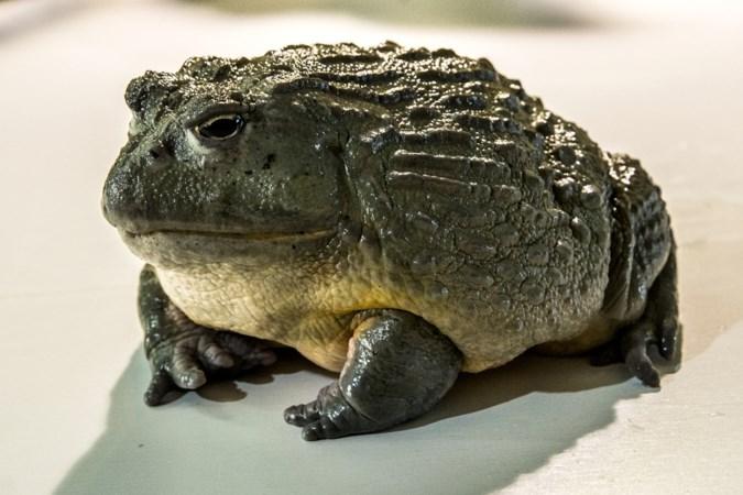 Werelddierendag: deze dieren hoeven niet op een extra knuffel van hun Limburgse baasjes te rekenen
