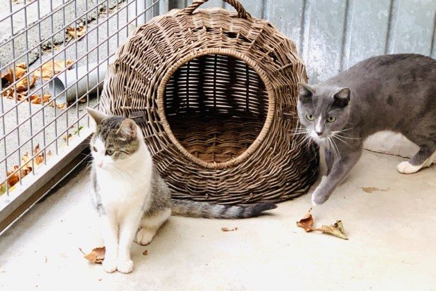 Dier van de week: Sibor en Lilly