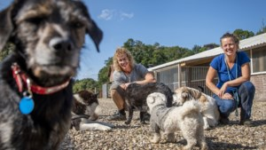 Bij Esmée en Pascal in Horn zijn alle dieren welkom voor 'rehabilitatie': 'Dieren zijn puur. Ze hebben geen dubbele agenda'