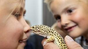 DragaZoo uit Venlo op je kinderfeestje: feesten met 'Freek Vonk' en heel veel enge beestjes