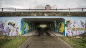 Bloemetjes en bijtjes willen vanaf Eijsdens viaduct mensen doen nadenken over een groenere toekomst