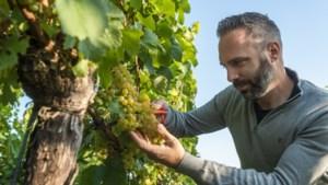 Vier Limburgse foodies over hun passie voor eten: 'In een restaurant denk ik weleens: dat kan ik beter'